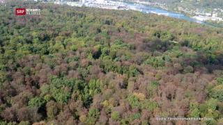 Video «Der Hitzesommer und seine Folgen für die Wälder» abspielen
