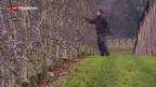 Video «Frostschaden-Versicherung» abspielen
