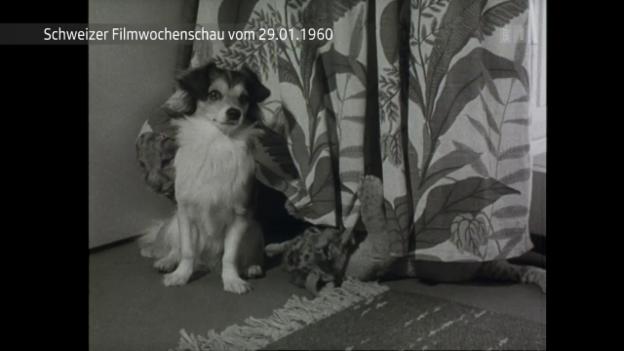 Video «Nummer 903 vom 29.1.1960» abspielen
