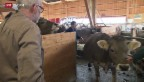 Video «Rare Nutztierärzte» abspielen