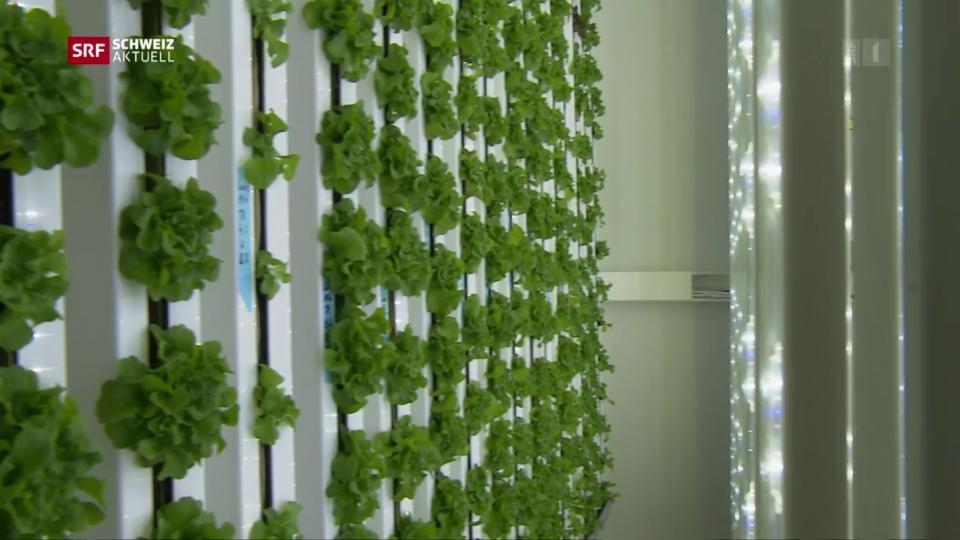 Erste Vertical Farm der Schweiz nimmt Betrieb auf