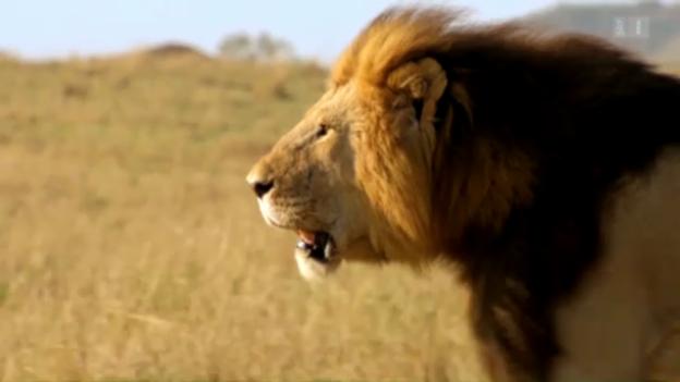 Video «Afrika - Die Zukunft» abspielen