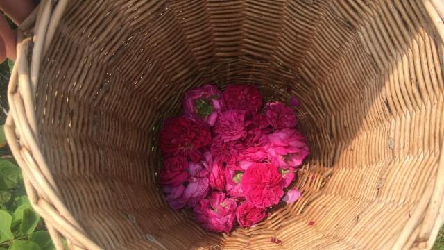 Die perfekte Rosenblütenmischung machts aus