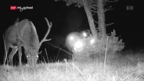 Neue Bilder wilder Tiere: Die unglaubliche Nähe (1/3)
