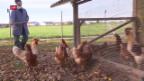 Video «Die Vogelgrippe ist zurück» abspielen