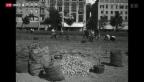 Video «70 Jahre Kriegsende: Die Anbauschlacht» abspielen