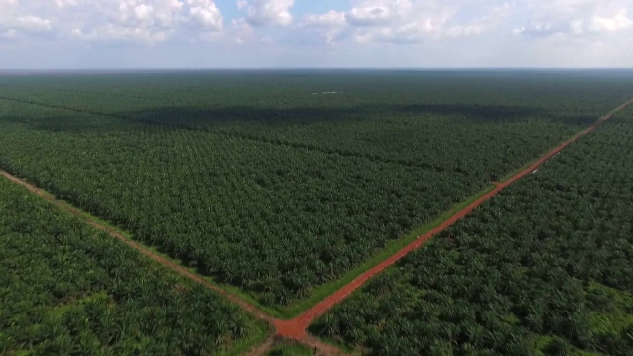Palmöl in unseren Lebensmitteln: Der versteckte Klimakiller