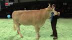 Video «Neue Regeln für Viehschau» abspielen