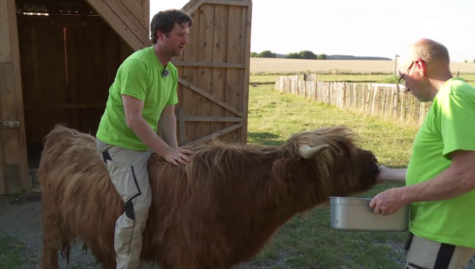 Remo Müller reitet auf einem Ochsen
