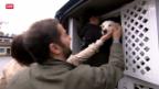 Video «Ein Herz für Strassenhunde» abspielen