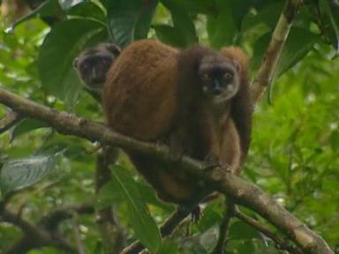 Projekt Madagaskar