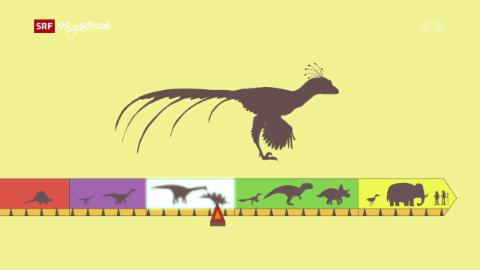Ralph und die Dinosaurier: Xiaotingia (24/26)