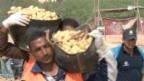 Video «Sahara-Kartoffeln auf Schweizer Tellern» abspielen