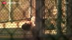 Video «Hungerstreik auf Guantanamo» abspielen