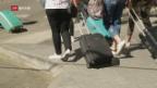 Video «Einheimische stören sich ab den Touristenmassen in Mallorca» abspielen