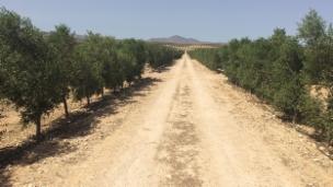 Link öffnet eine Lightbox. Video Kampf ums Wasser – Olivenanbau extrem in Andalusien abspielen.