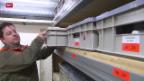 Video «FOKUS: St. Gallen mobilisiert Zivilschutz» abspielen