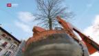 Video «Bäume auf Wanderschaft» abspielen