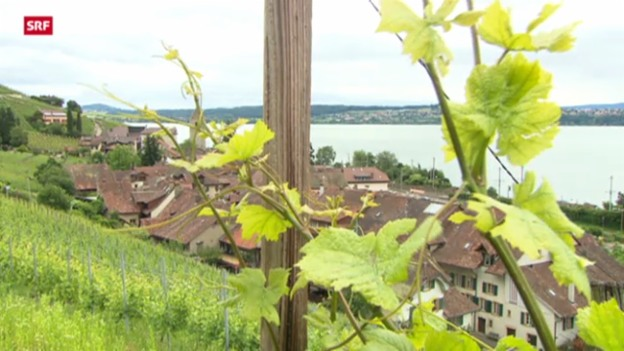 Video «Schweiz aktuell vom 24. Juni 2013» abspielen
