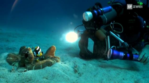 Video «Drei Tierfotografen auf Bilderjagd (1)» abspielen