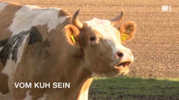 Video «NETZ NATUR «Vom Kuh sein» (Schweizerdeutsch)» abspielen