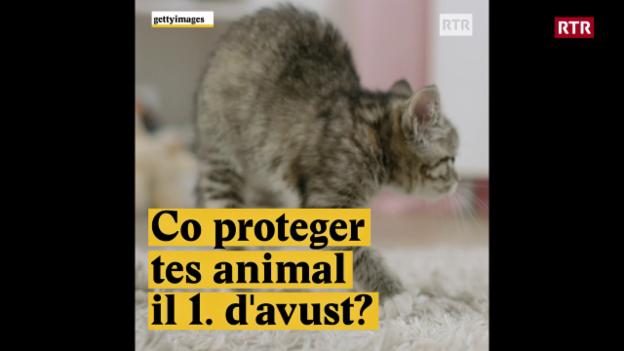 Laschar ir video «Co proteger tes animal il 1. d'avust?»