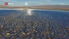 Video «Kalifornien als klimapolitischer Gegenpol zu Washington» abspielen