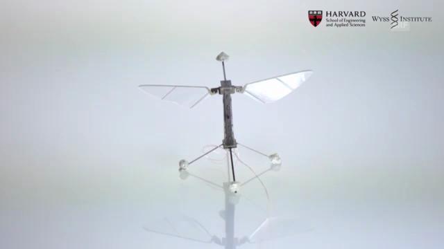Die Roboter-Fliege im Porträt (Harvard University)