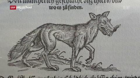 Wolf: Wölfe im Wald und im Dorf (2/3)