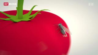 Video «Gentech beflügelt Agrarforschung» abspielen