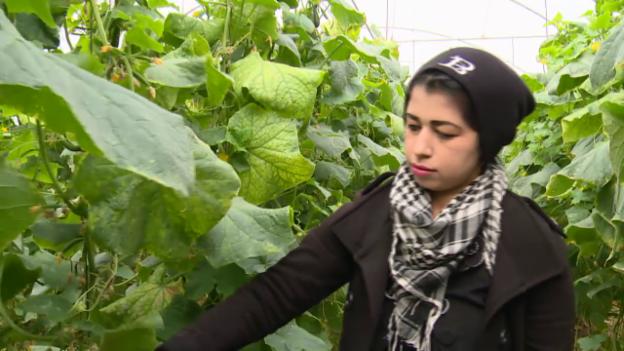 Video «Medizinische Versorgung auch im besetzten Gebiet» abspielen