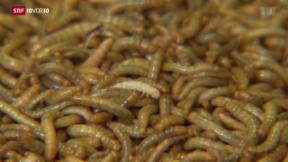 Video «Insekten bald auf Schweizer Tellern?» abspielen