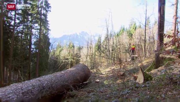Video «Holzbranche ächzt unter Frankenschock» abspielen