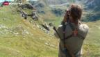 Video «Wölfe im Wallis: «Wie die Suche nach der Nadel im Heuhaufen»» abspielen