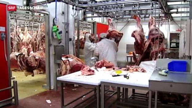 Video «Schädliches Medikament im Pferdefleisch» abspielen