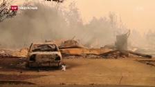 Video «Kaliforniens Weinberge in Brand» abspielen