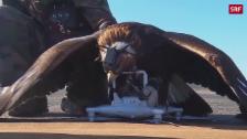 Link öffnet eine Lightbox. Video Mit Adler auf Drohnenjagd abspielen