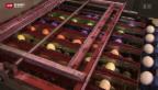 Video «Eierfärben im Akkord» abspielen
