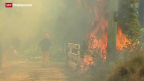 Video «Sydney bereitet sich auf Riesenfeuer vor» abspielen