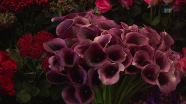 Video «Blumenzauber» abspielen