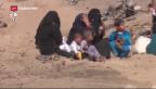 Video «Vormarsch auf Mossul – humanitäre Katastrophe befürchtet» abspielen