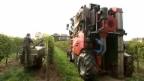 Video «Juiceliner: Der Trauben-Ernte-Entsafter der Zukunft?» abspielen