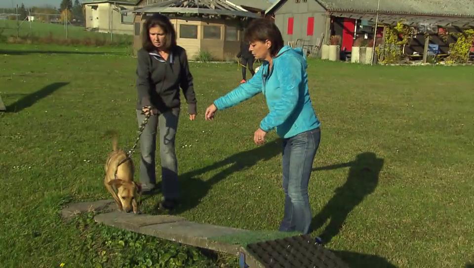 Monika Fasnacht beim Hunde-Training