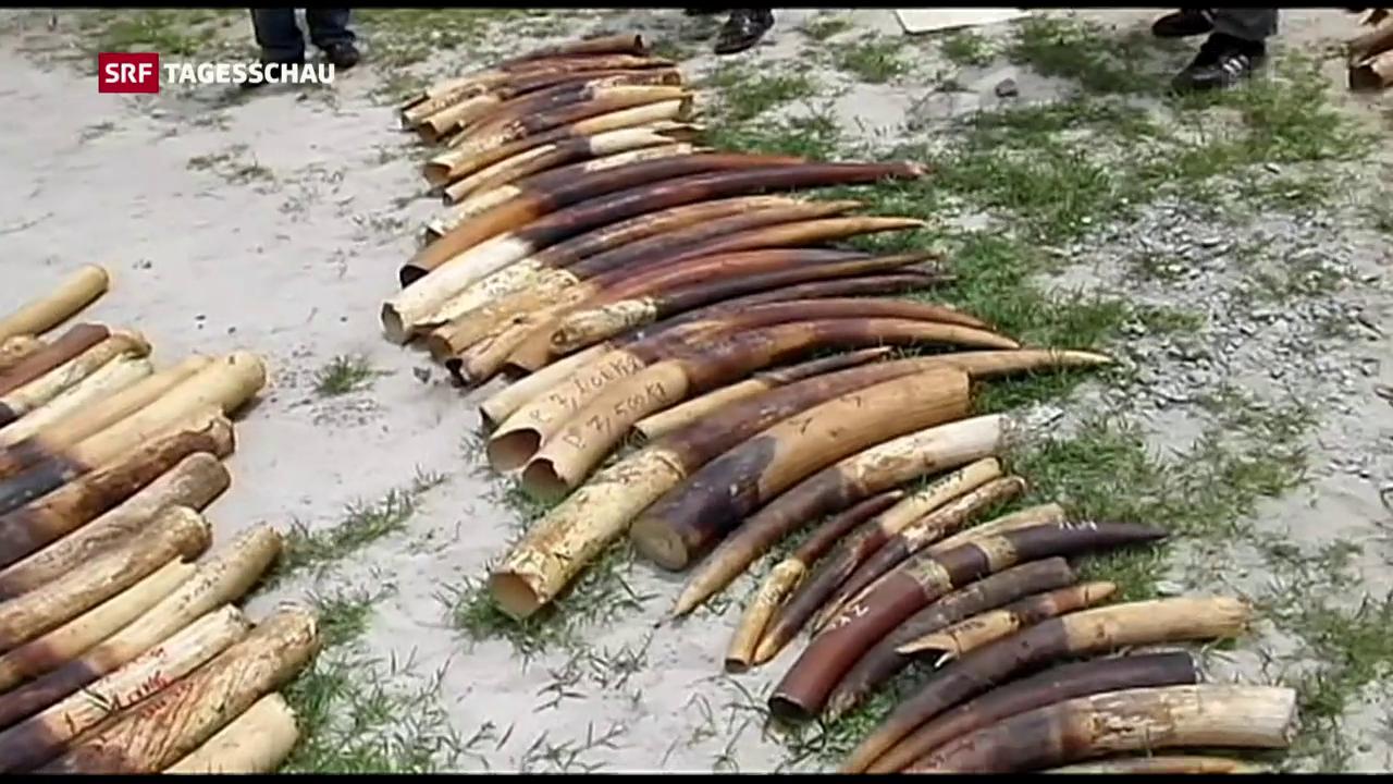 China verbietet Handel mit Elfenbein
