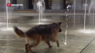 Video «Tierschützer fordern strengere Gesetze» abspielen