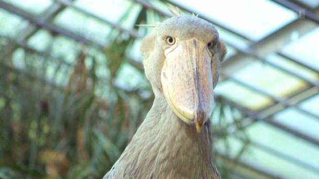 Video «Wir und der Zoo - Eine Zeitreise mit Kathrin Winzenried» abspielen