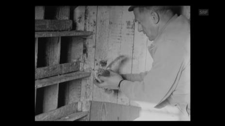Video «Taubenwart von Zürich (1968)» abspielen