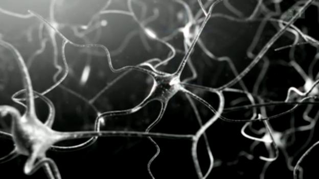 Video «Human Brain Project: Zwischen Biologie und Computerwissenschaft» abspielen