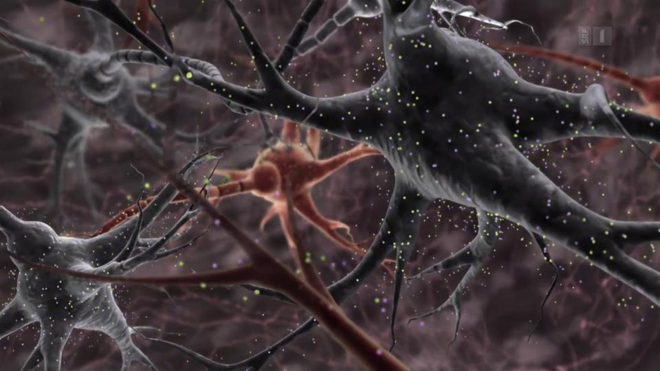 Gehirnerschütterungen schneller erkennen