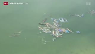 Video «Opferzahl auf den Philippinen nach Taifun steigt dramatisch» abspielen